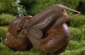 snail_sex_fs
